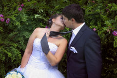 Naughty bride leads her groom on a tie and  kiss Stock Photography