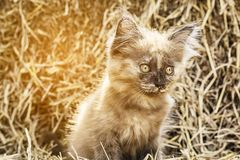 Naughty brown kitten Stock Photo