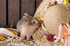 Naughty bunny Royalty Free Stock Photo