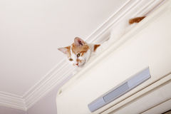 A naughty cat. Lying on the indoor air conditioner Stock Images