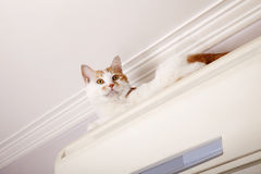 Naughty cat Stock Photo