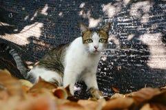 Naughty cat Stock Photography