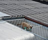 Naughty cat walking on neighbour house wide  roof Stock Photos