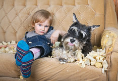 Naughty child and schnauzer puppy Stock Photo