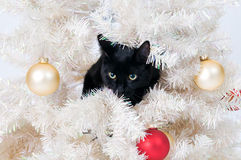 Naughty christmas cat Stock Image
