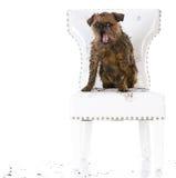 Naughty dirty dog Stock Image