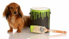 Naughty dog stock image