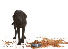 Naughty Dog! Royalty Free Stock Photos