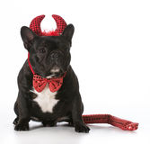 Naughty dog Royalty Free Stock Photo