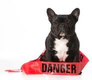 Naughty dog Royalty Free Stock Photography