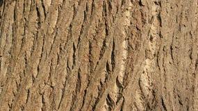 naughty Feche acima das texturas da casca de árvore imagens de stock