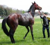 Naughty horse. Royalty Free Stock Photo