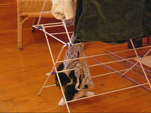 kittens playing with the laundry stock video footage