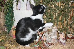 Naughty Kitty. The naughty kitten wants to catch the branches, does not mind destroying the Belen stock photos