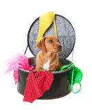 Naughty Puppy Royalty Free Stock Image