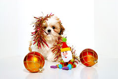 Naughty Puppy Royalty Free Stock Photography