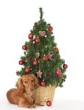 Naughty puppy stock photography