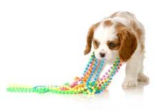 Naughty puppy Stock Photo