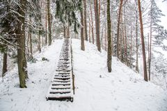 Mound in winter forest Stock Photography