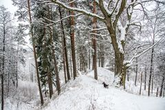 Mound in winter time Royalty Free Stock Photography