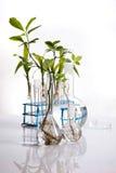 Nauka eksperyment z rośliny laboratorium obraz royalty free