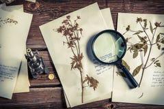 Nauka rośliny pod mikroskopem dla biologii lekcj obraz royalty free