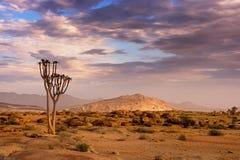 Naukluftnatuurreservaat, Namib-Woestijn, Namibië Stock Foto's
