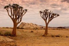 Naukluftnatuurreservaat, Namib-Woestijn, Namibië Royalty-vrije Stock Afbeeldingen