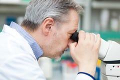 Naukowiec dyrygentury badanie patrzeje przez mikroskopu Zdjęcia Stock