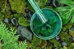 Naukowiec nalewa organicznie esencj substancje wewnątrz Petri naczynie, kosmetyki i skincare formułuje czystą naturalną rośliną, zdjęcia royalty free