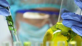 Naukowiec porównuje rośliien próbki w kolbiastej i próbnej tubce, hoduje nowych rodzaje zbiory wideo
