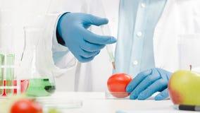 Naukowiec pracuje na genetycznie zmodyfikowanym jedzeniu zdjęcia royalty free