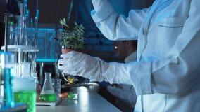 Naukowiec robi eksperymentom na roślinie obrazy stock