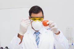 Naukowiec robi zastrzykowi pomidor zdjęcia stock