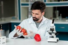 Naukowiec w białym żakiecie pracuje egzamininujący warzywa w laboratorium fotografia stock