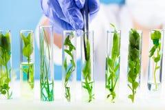 Naukowiec z pincetami utrzymuje rośliny w próbnej tubce Fotografia Royalty Free