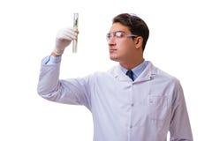 Naukowiec z zieloną rozsadą w szkle odizolowywającym na bielu Obraz Royalty Free