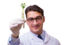 Naukowiec z zieloną rozsadą w szkle odizolowywającym na bielu Fotografia Stock