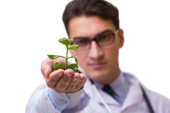 Naukowiec z zieloną rozsadą w szkle odizolowywającym na bielu Obraz Stock
