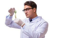 Naukowiec z zieloną rozsadą w szkle odizolowywającym na bielu Zdjęcia Stock