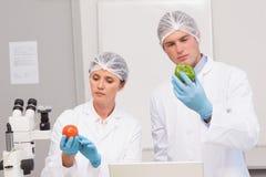 Naukowowie egzamininuje attentively zielonego pieprzu i pomidoru Obrazy Royalty Free