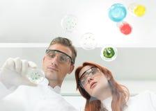 Naukowowie egzamininuje Petri naczynie w lab obraz royalty free