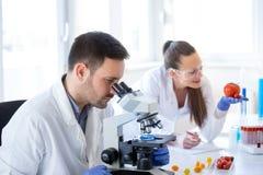Naukowowie z warzywami w laboratorium fotografia stock