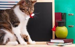 Naukowy kot Zdjęcie Stock