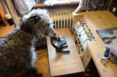 Naukowy pies Obrazy Stock