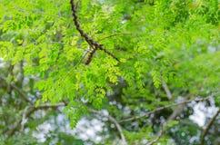 Naureblad op brach van de boom Stock Foto