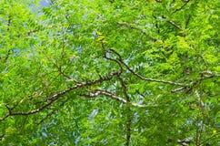 Naureblad op brach van de boom, close-up Royalty-vrije Stock Fotografie