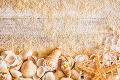 Nautical background and border of seashells Stock Photography