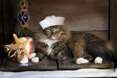 Nautical Cat. A cat dressed in sailors hat laying on worn wood decking with nautical themed bouys, floats, starfish and shells. White sand in foreground and Stock Images