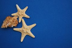 Nautical, Marrine concept. Starfish with Shell against a Blue background with copy Space. Summer Holliday. Royalty Free Stock Image